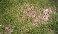 Start Taking Stock of Your Lawn it's Springtime