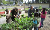 How Community Gardens Can Improve Society