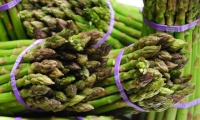 Cooking Asparagus the Right Way
