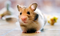 Incredibly Small Pets That You Can Have