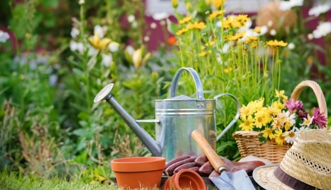 Time-Saving Gardening Tools and Tricks Picture