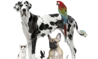 How to Know What Types of Pets You Like
