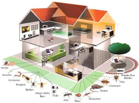 Get Rid of Pests in Your Home