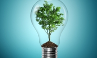 Bulb light with tree inside on blue background; Shutterstock ID 91957046; PO: aol; Job: production; Client: drone