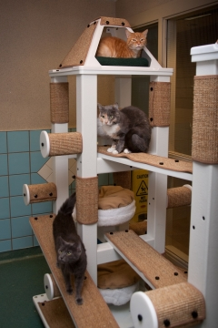 Transform Your Interior Into a Cat Friendly Environment Picture